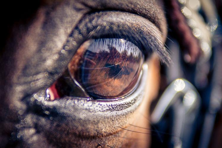 Close-up Day Eyeball Eyelash Eyesight Human Body Part Human Eye One Person Outdoors People Real People Sensory Perception