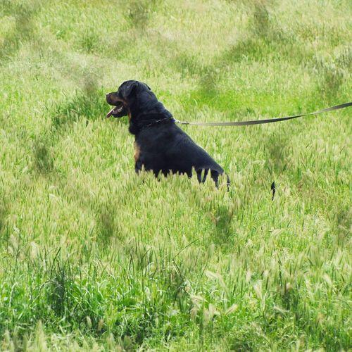 Goat on grassy field