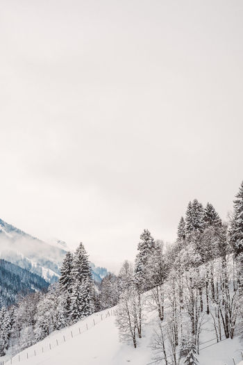 Skiing Beauty In Nature Cold Temperature Day Landscape Lanscape Mountain Nature No People Outdoors Scenics Ski Sky Snow Snow On Trees Snowcapped Mountain Tranquil Scene Tranquility Tree Trees And Sky Weather White Color Winter