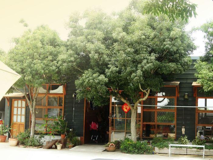 Tree Door Sky