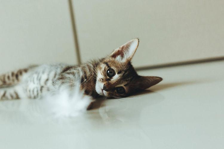 Portrait of kitten relaxing on floor