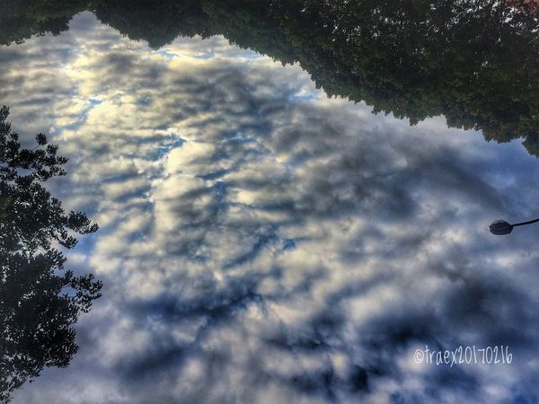 River of Clouds Sky Nature Beauty In Nature Cloud - Sky Scenics Tranquility No People Low Angle View Outdoors Day Tree Tranquil Scene