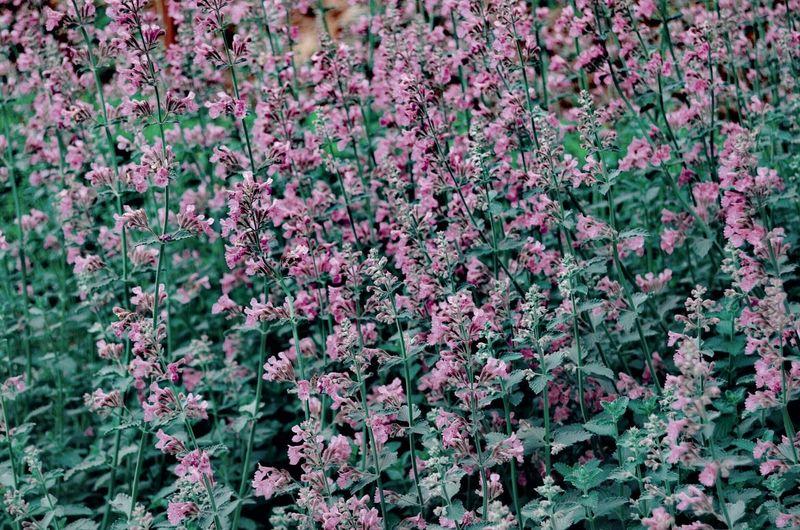 Flower Close-up Plant Flora Vegetation Spring Botanical Relaxing Moments Garden Blossoming  Blooming Flower Head Petal Pollen Plant Life