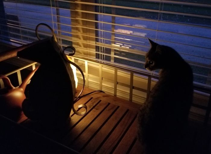 Seahorse & Seacat Sillouette Seahorse Cool Cats  EyeEmNewHere Cat At Home Window Sill Tabby Cat