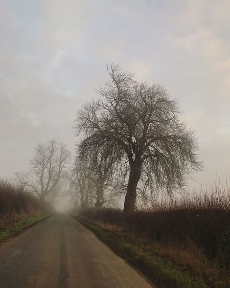 Tree Bare Tree The Way Forward Road Nature Sky Tranquility Landscape Scenics Transportation Outdoors Tranquil Scene Beauty In Nature Day No People Lone Passing