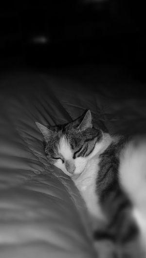 Mouflette Cat