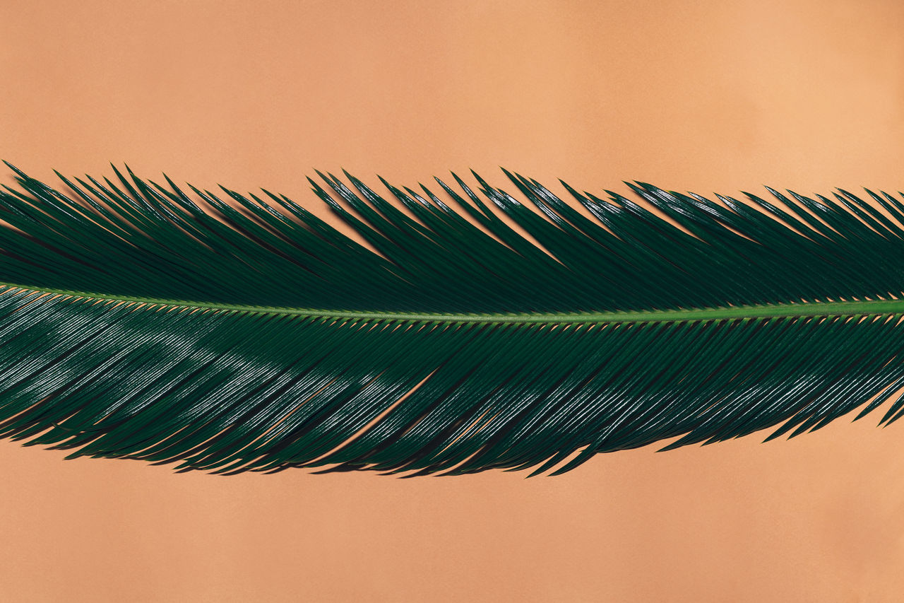 Close-up of leaf against beige background