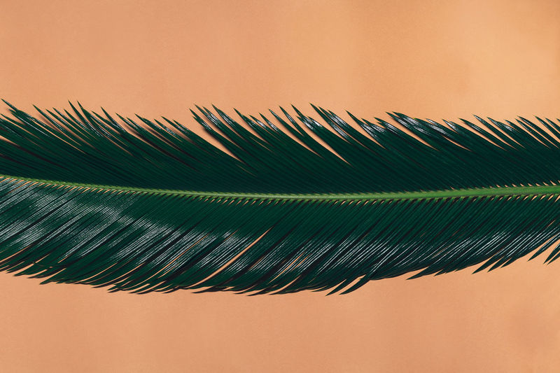 Close-Up Of Leaf Against Beige Background