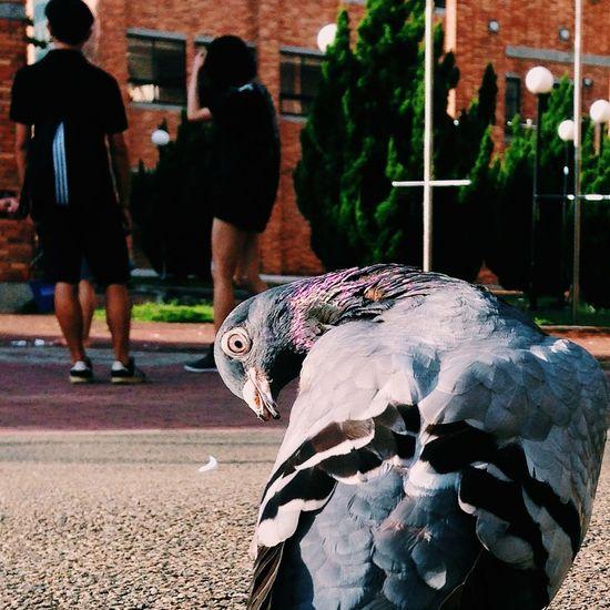 Birds Providence University Fat At School