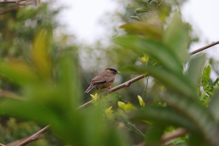 A little hair bird sitting in garden in day with green blur gradient background, bird watching