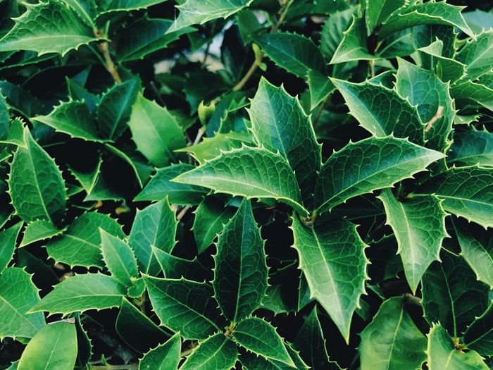 Leaf Plant Part Growth Plant Green Color Beauty In Nature Full Frame Nature No People Backgrounds Close-up Day Freshness Tranquility Field