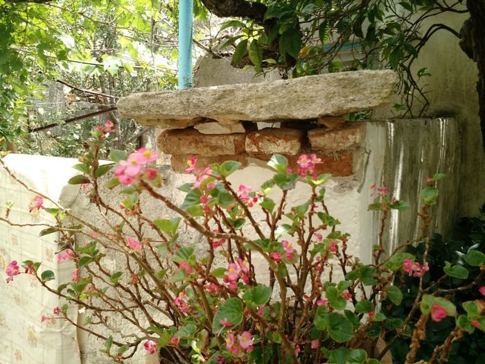 Flower Growth Nature Beauty In Nature Plant Fragility No People Freshness Blooming Pink Color Day Outdoors Built Structure Flower Head Architecture Close-up Beauty In Nature Crete Greece Village Life Country Living Quaint  Nature Colors Of Life Stone Wall Ancient