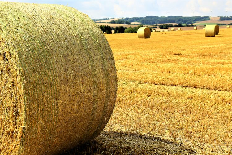 Harvesting Rolled Up Tranquility No People Outdoors Tranquil Scene Nature Field Rural Scene Land Agriculture Plant Environment Hay Bale  Farm Landscape Tree Day Scenics - Nature Beauty In Nature