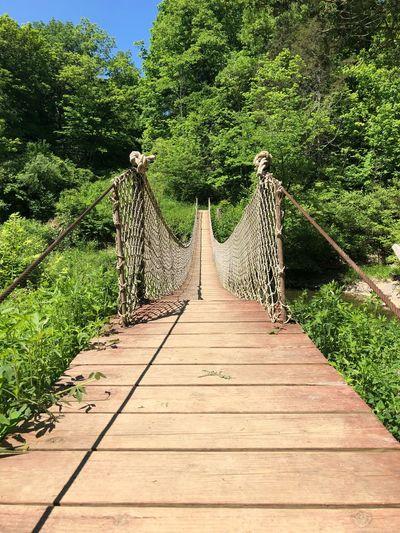View of footbridge against trees