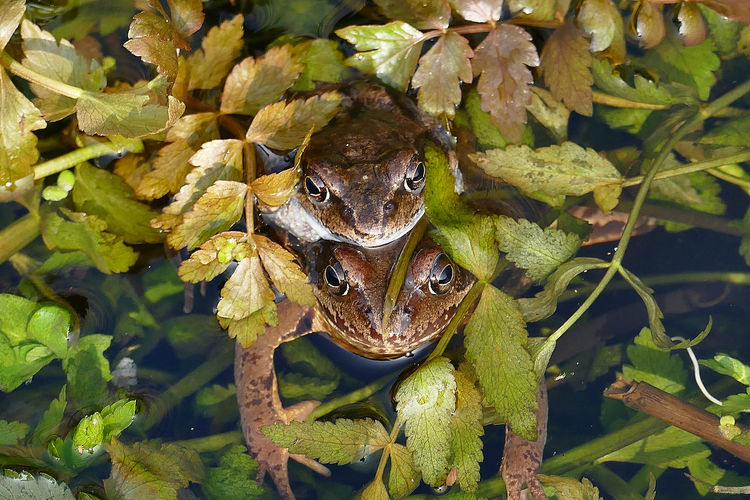 Green Color Close-up Beauty In Nature Outdoors Nature Frog Frosch Springtime Frühling