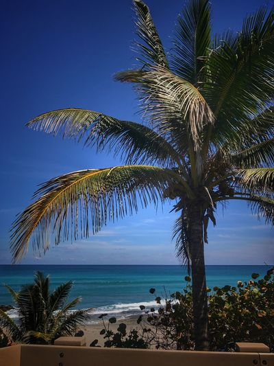 Sea Palm Tree Horizon Over Water Blue Scenics Tree Nature Beauty In Nature Beach Tranquil Scene Outdoors Water Sky Clear Sky No People Tranquility Day Red Reef Park