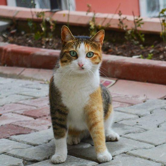 Nikon D5200 Portrait Cat Photography EyeEm Best Shots