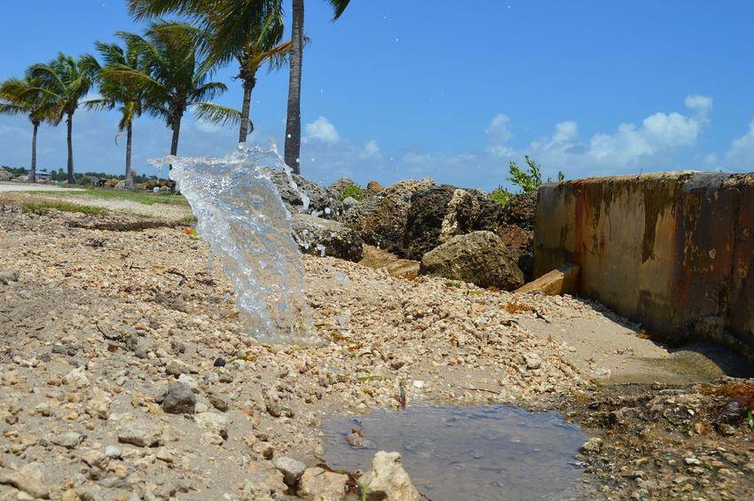 Nikon D3200 No Filter Nature Matheson Park Popular Photos Scenery Miami Waterhole Palm Trees Ocean View