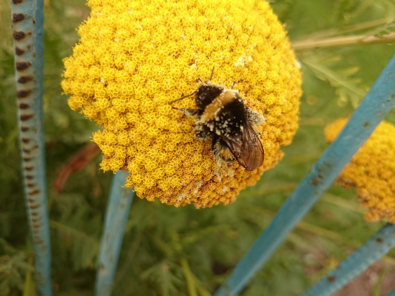 flower, yellow, insect, nature, beauty in nature, fragility, freshness, animal themes, animals in the wild, one animal, no people, growth, outdoors, bee, close-up, day, plant, flower head