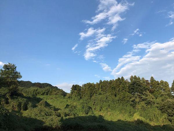まうんてんさいど Plant Sky Growth Tree Cloud - Sky Beauty In Nature Nature Day Sunlight No People Outdoors Green Color Sunny