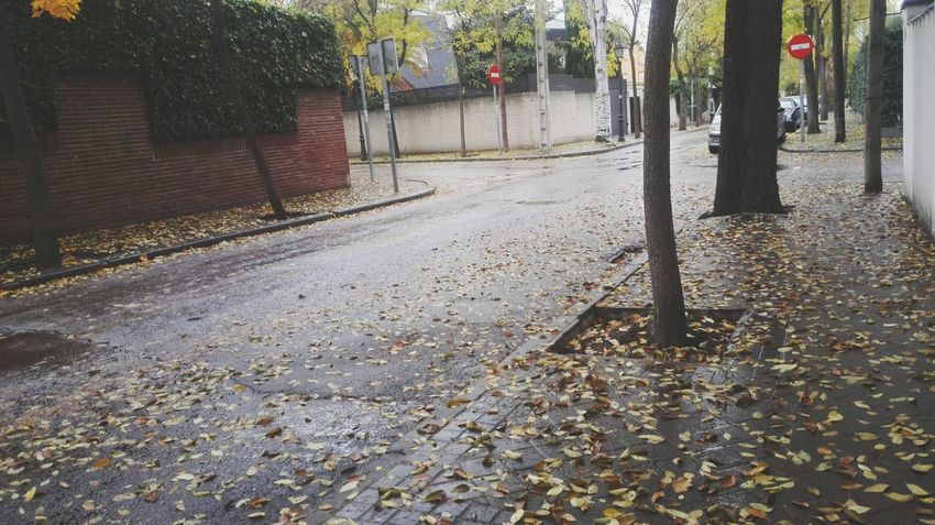 Calle Street Streetphotography Streetphoto Rainy Road Rainy Day Rain Rainy Season Autumn Autumn Leaves Autumn Collection Desert Street