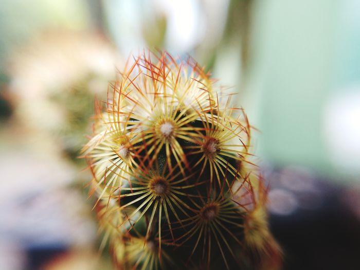 Macro close-up of cactus Spiked Thorn Danger Close-up Plant Barrel Cactus Needle - Plant Part Sharp Spiky Saguaro Cactus Plant Life Cactus