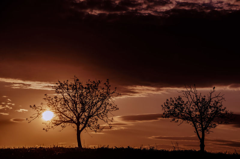 Silhouette of trees at sunset