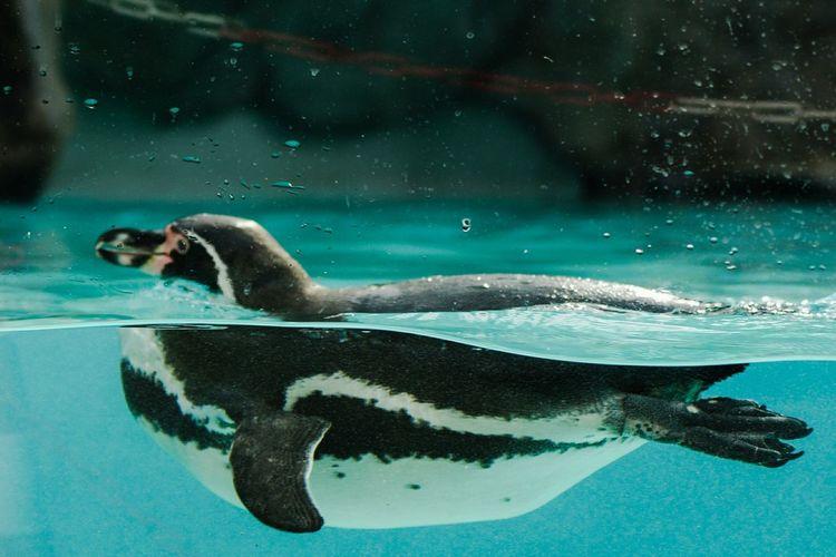 Swimming Underwater Beauty In Nature Nature Water Day Pinguine