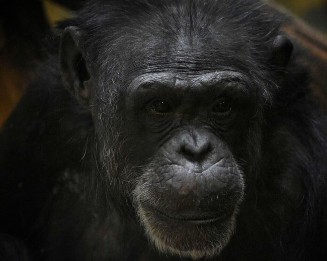 Close-up portrait of monkey in zoo