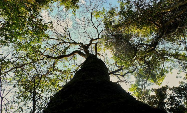 Arvore Tree Árvores E Céu