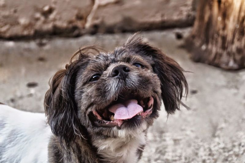 Dog Smile Cheese Smiling Dog Love Doglover Cute