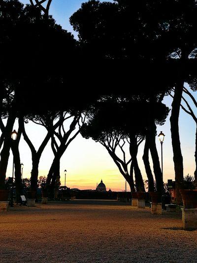 Sunset in Rome Sunset City Sky No People Tree Outdoors Nature Day Saturday Rome Italy🇮🇹 Giardinodegliaranci