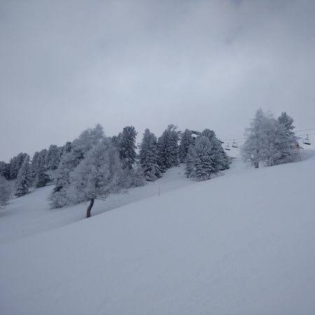 Snow Skiing 🎿 Switzerland Trees Untouched Remote No People
