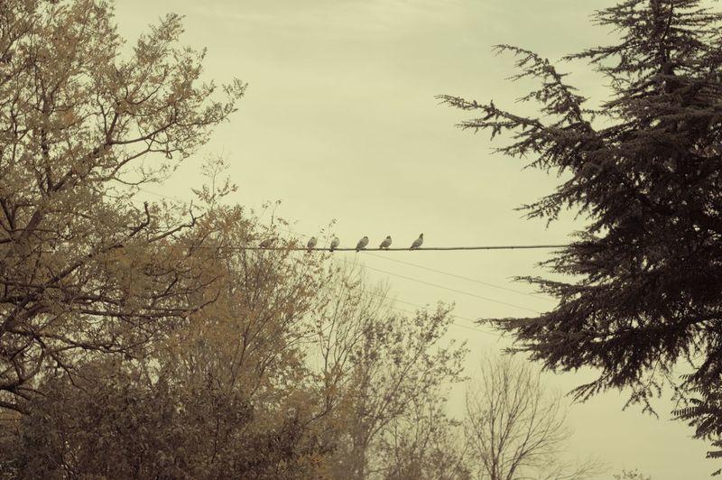 Birds Colors