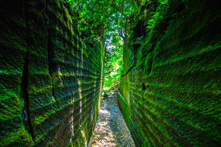 Plant Green Color Tree Growth Land Forest Day Nature No People Direction Lush Foliage Outdoors Foliage The Way Forward Beauty In Nature Footpath Tranquility Scenics - Nature Sunlight Tranquil Scene Rainforest Alley Trail Hello World Tadaa Community Japan Japan Photography