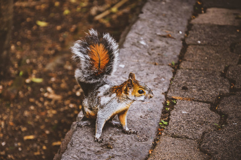 Friendly EyeEm Nature Lover Nature Photography Animal Animal Themes Animal Wildlife Animals In The Wild Chipmunk Day Field Focus On Foreground Footpath Hairy  High Angle View Looking At Camera Mammal Nature Nature_collection No People One Animal Outdoors Portrait Rodent Squirrel Sunlight Whisker