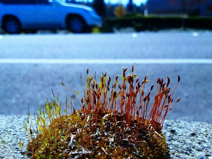 Focus spot on! On The Road Walking Around Moss And Lichen Nature_ Collection