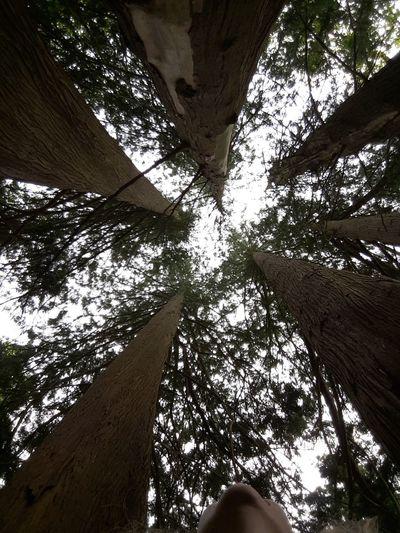 one tree Eternal Life Wonderful Nature