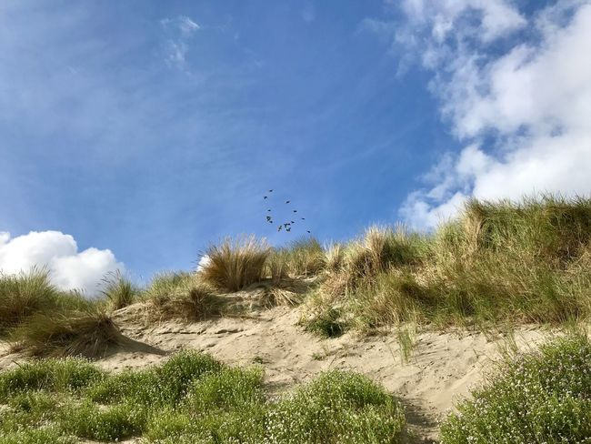 Dünen Dünenlandschaft Sky Plant Cloud - Sky Tree Nature Growth Beauty In Nature No People Day Tranquility Land Animal Bird Outdoors Flying Low Angle View
