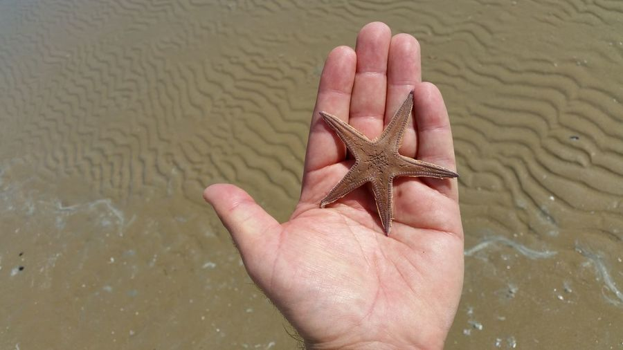 Cropped image of person holding starfish at beach