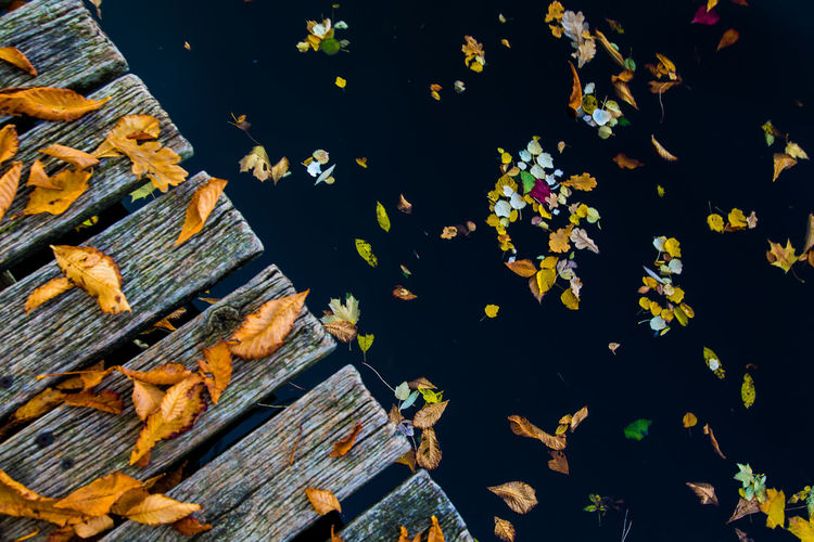 High angle view of autumn leaves in lake