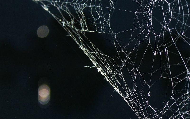 Web Spiderweb Evening Photo Canon
