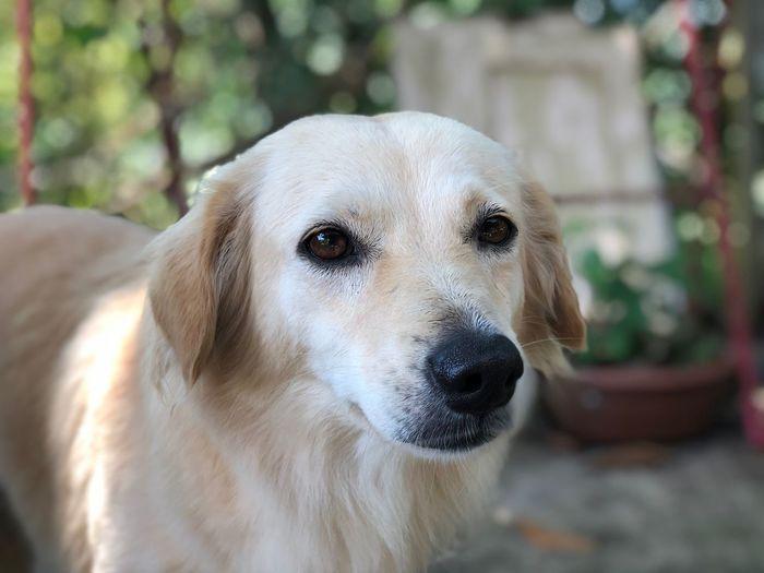 Dolly One Animal Animal Themes Animal Mammal Focus On Foreground Vertebrate Domestic Animals Pets Domestic Dog First Eyeem Photo