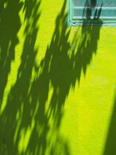 shadow on the wall Adapted To The City Architecture Building Exterior Built Structure Close-up Green Color Leaf Lihts And Shadows Minimal Minimalism Minimalobsession No People Shadow Shadows & Lights Simplicity Sunlight The City Light Wall - Building Feature Neon Lights