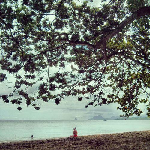Under The Tree Beachphotography Sand