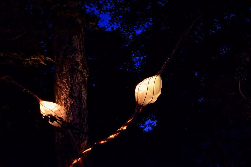 Yesterday I visited an art festival here in Moscow. It is a free event held in one of the parks. There were different light installations which looked awesome between the trees. I wanted to share with you the photographs I took there, and it will be a long series 🙈😊😊 Night No People Outdoors Nature Hanging Illuminated Tree Close-up Tree Trees Light And Shadow Lights Light In The Darkness Art Festival Art Event Park Arts Culture And Entertainment