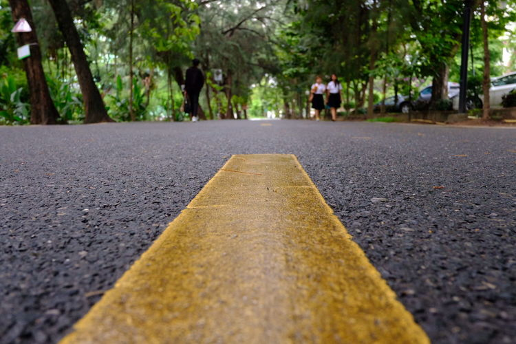 Tree Road City Asphalt Surface Level Close-up Road Marking Bicycle Lane Yellow Line Roadways White Line Country Road Traffic Arrow Sign Arrow Symbol Pedestrian Crossing Sign Road Sign Dividing Line Arrow Sign