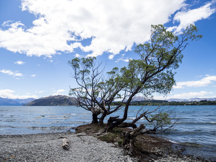Camping Discover Your City Nature New Zealand Beauty New Zealand Landscape Wanaka Attraction Beach Beauty In Nature Branch Cloud - Sky Day Discovery Horizon Over Water Lake Lakeshore Nature New Zealand No People Outdoors Sand Scenery Scenics Sea Sky Tourism Tourist Destination Tranquil Scene Tranquility Tree Wanakalake Water Wave