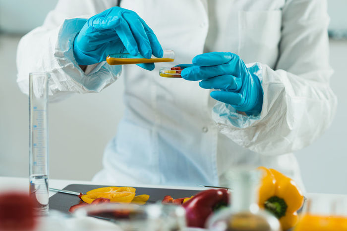 Food Safety Inspector Working With Vegetables In Laboratory Checking Cutting Food Quality Laboratory Analysis Quality Red Additives Analysis Analyzing Bell Peppers Biotechnology Food Health Inspecting Inspector Laboratory Organic Peppers Pesticides Petri Dish Quality Control Technician Test Testing Yellow
