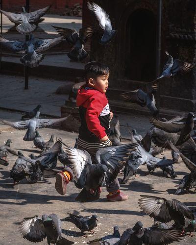 Boy on birds
